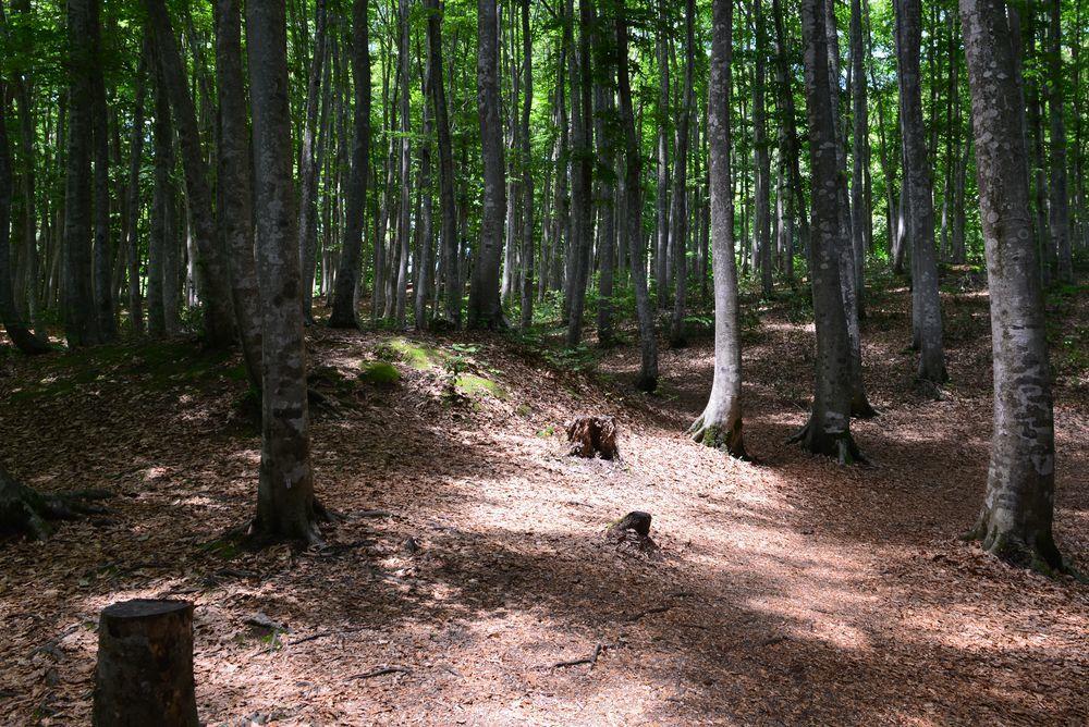 美人林 木漏れ日-3