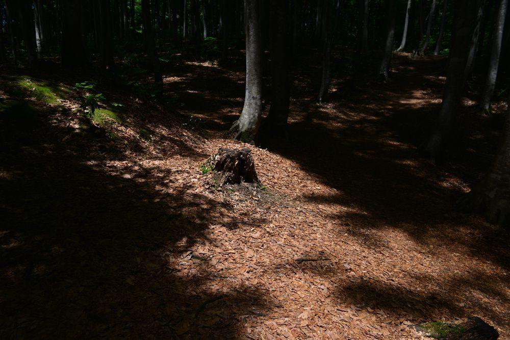 美人林 木漏れ日-4