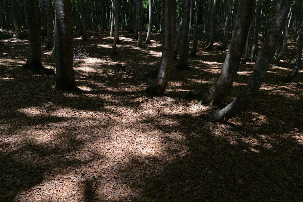 美人林 木漏れ日-5