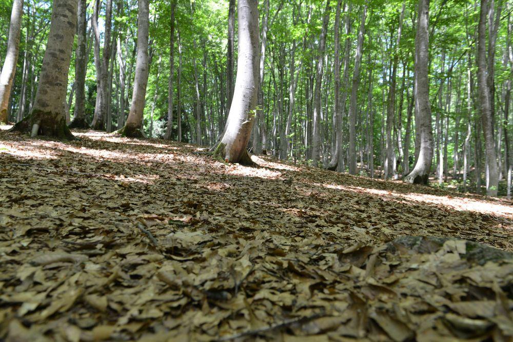 美人林 木漏れ日-6
