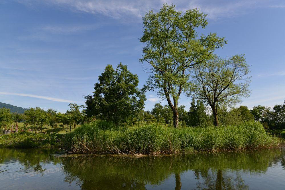 公園 水辺-3