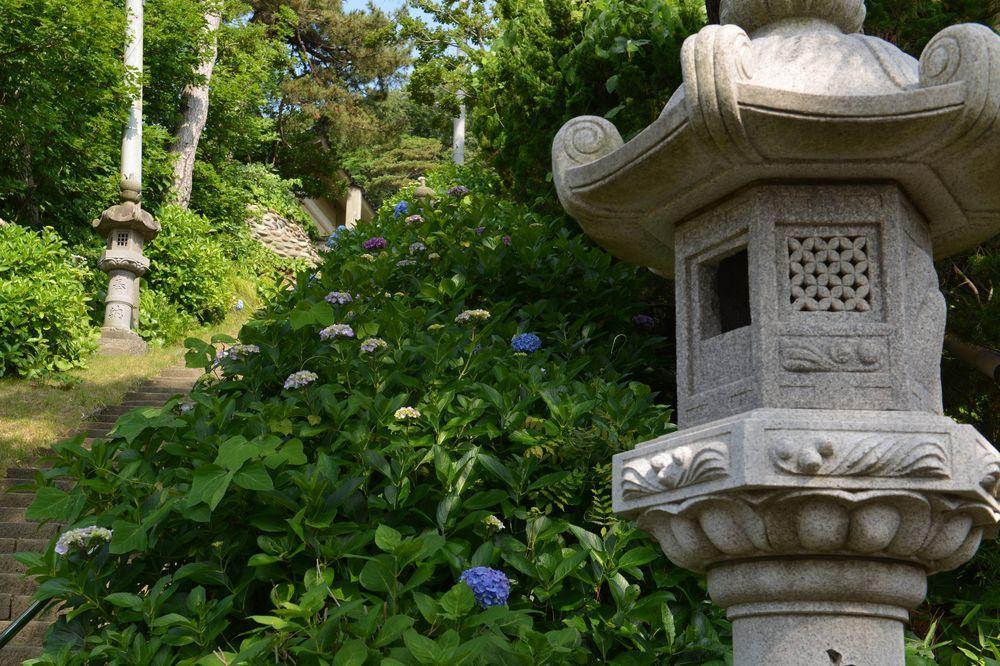 法福寺の紫陽花-2