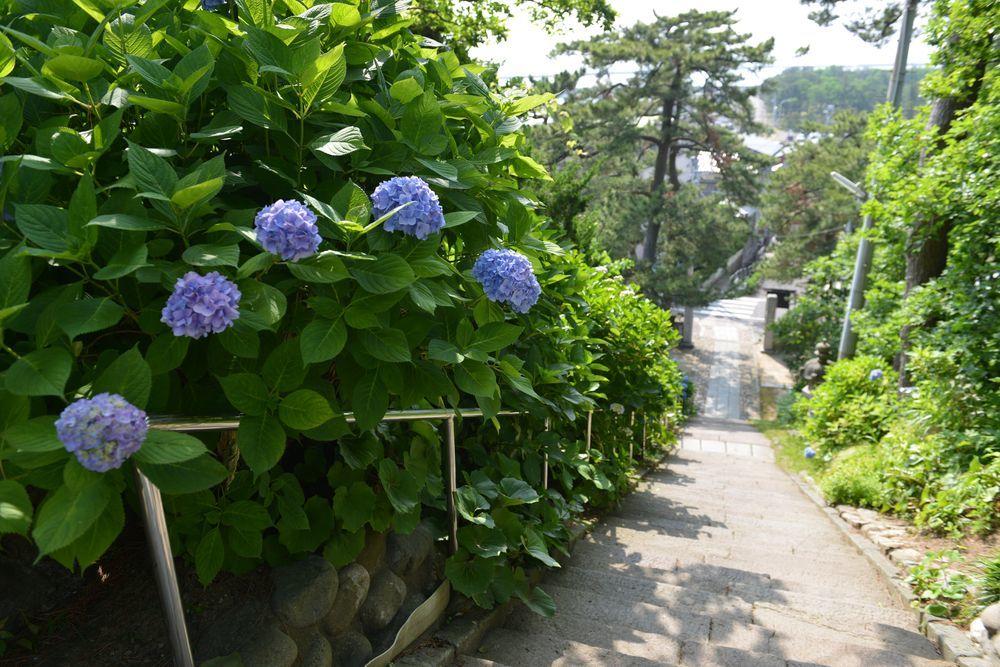 法福寺の紫陽花-3
