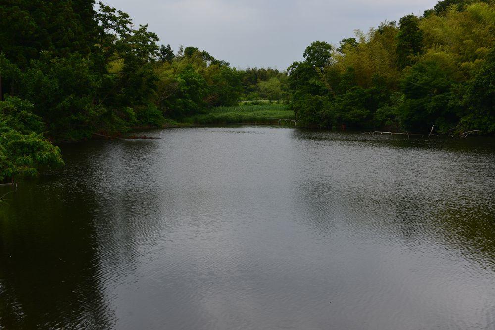 雨の溜池-1