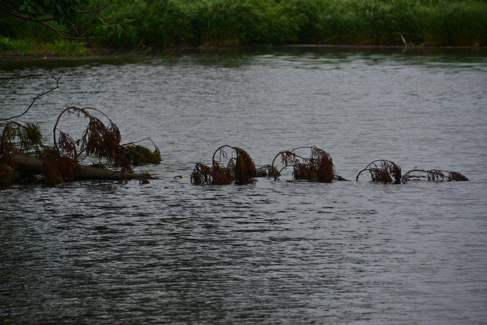 雨の溜池-5