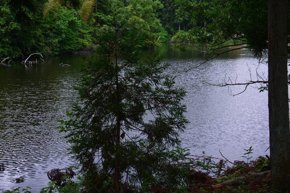 雨の溜池-6