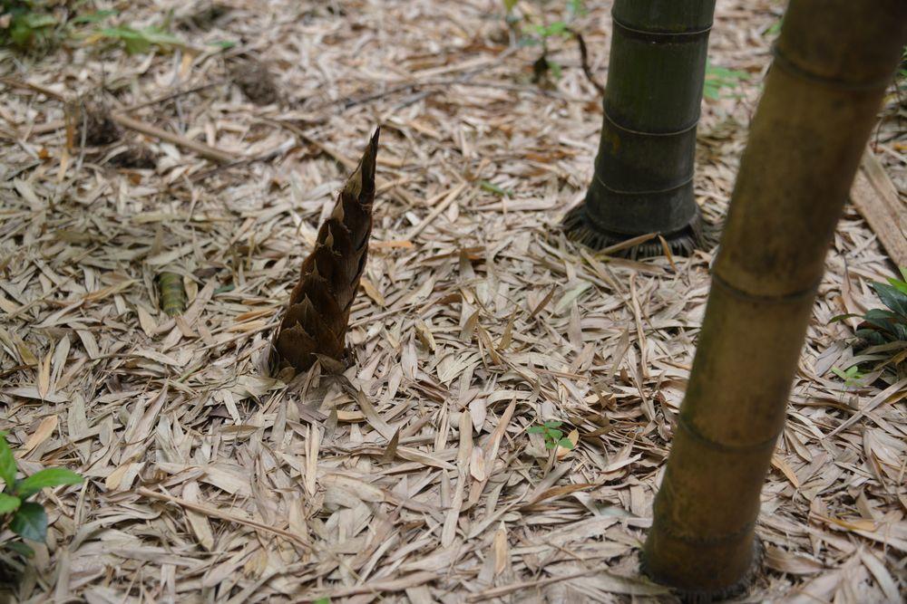 竹林の地面-1
