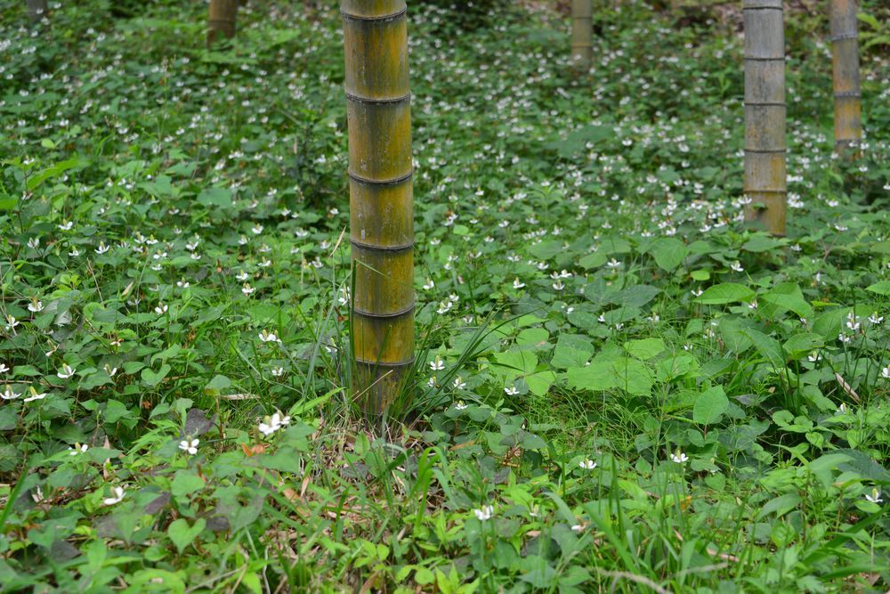 竹林の地面-4