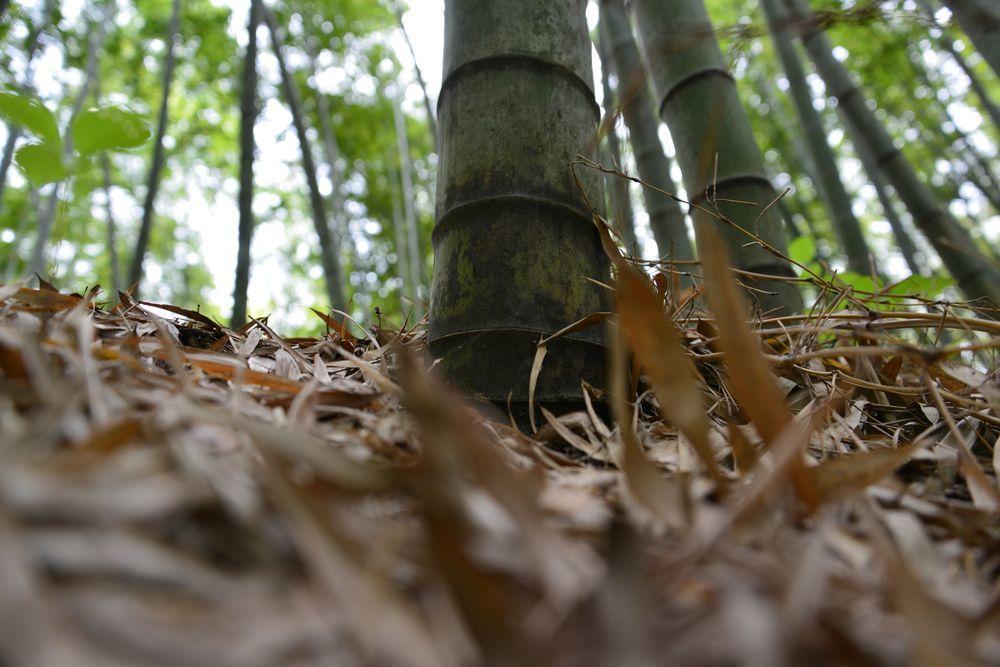 竹林の地面-5