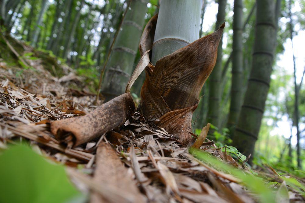 竹林の地面-6