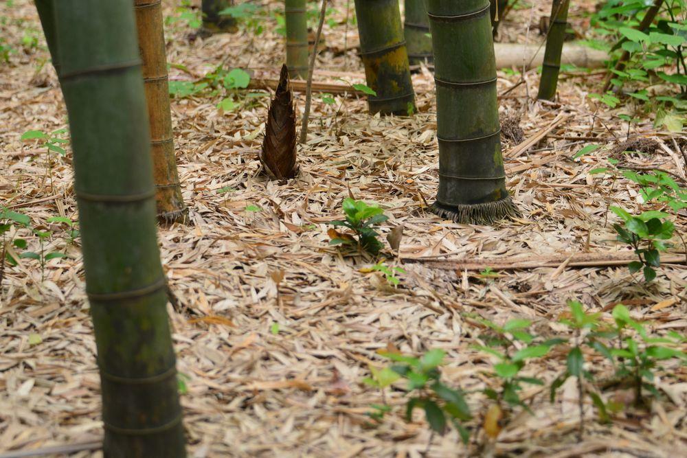 竹林の地面-7