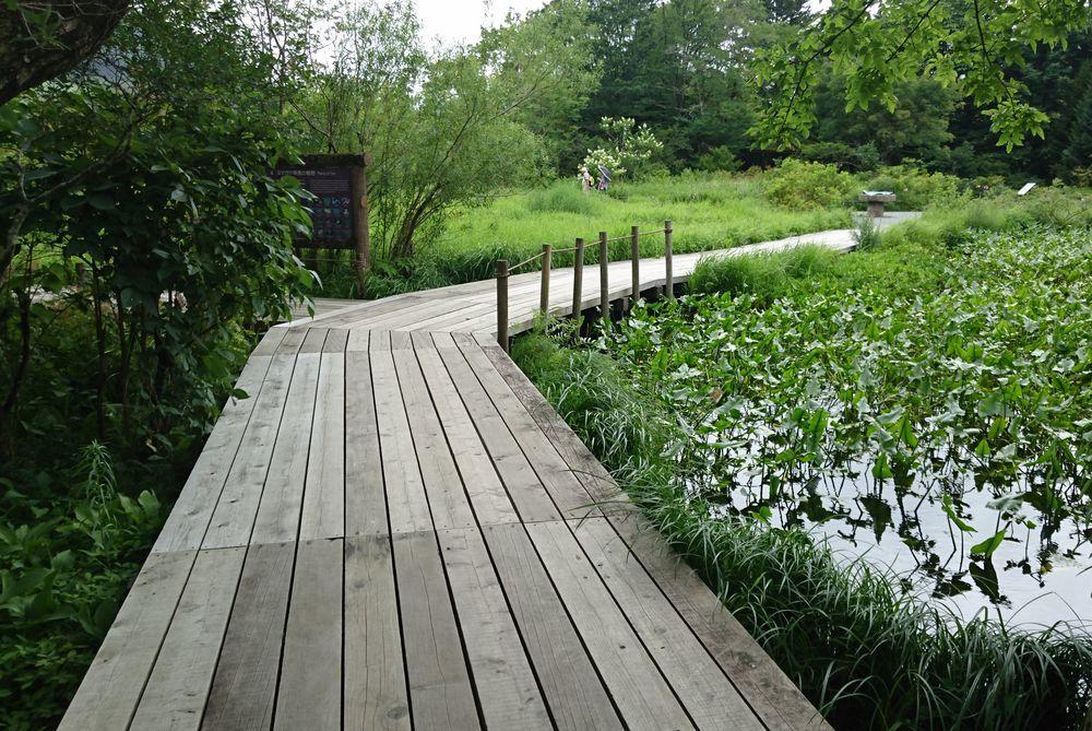 箱根湿性花園-1
