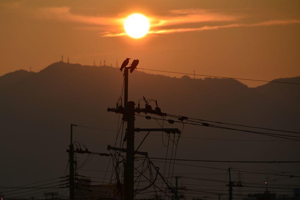 夕陽にカラスー3