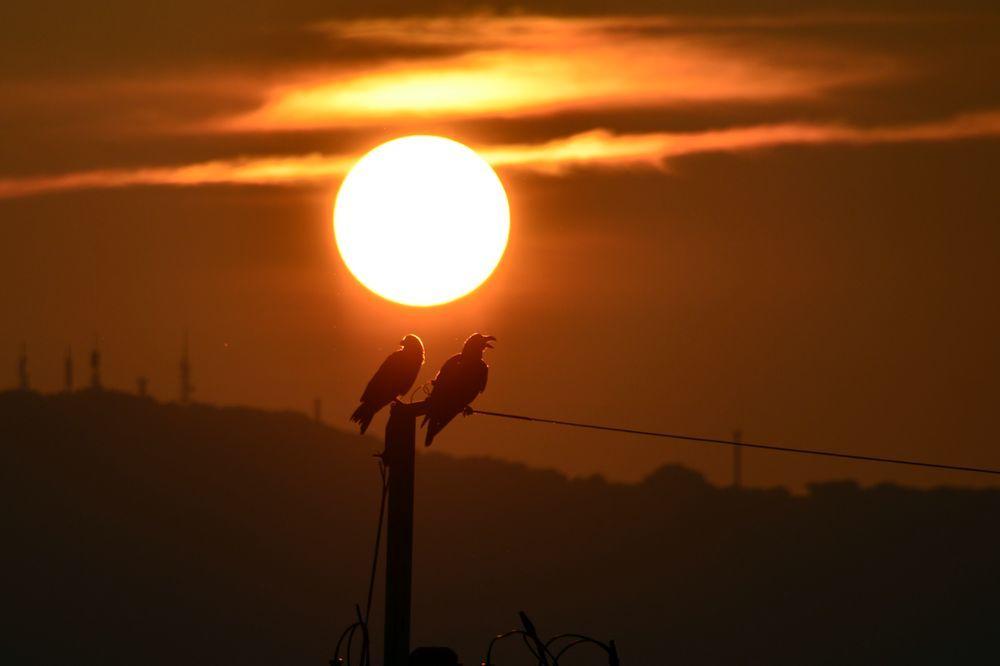 夕陽にカラスー4