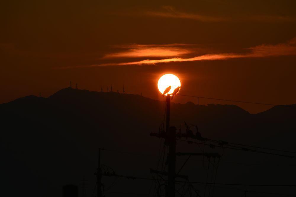 夕陽にカラスー5