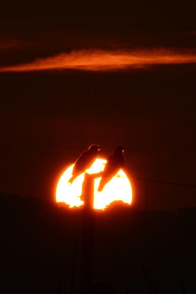 夕陽にカラスー6