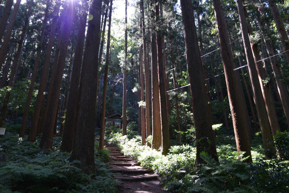 林の中-2