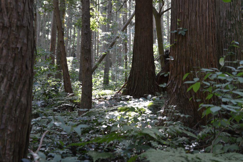 林の中-4