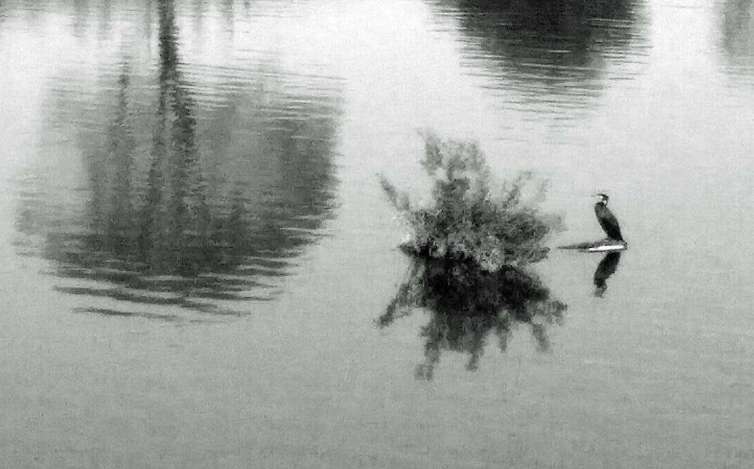 アパート近くの池