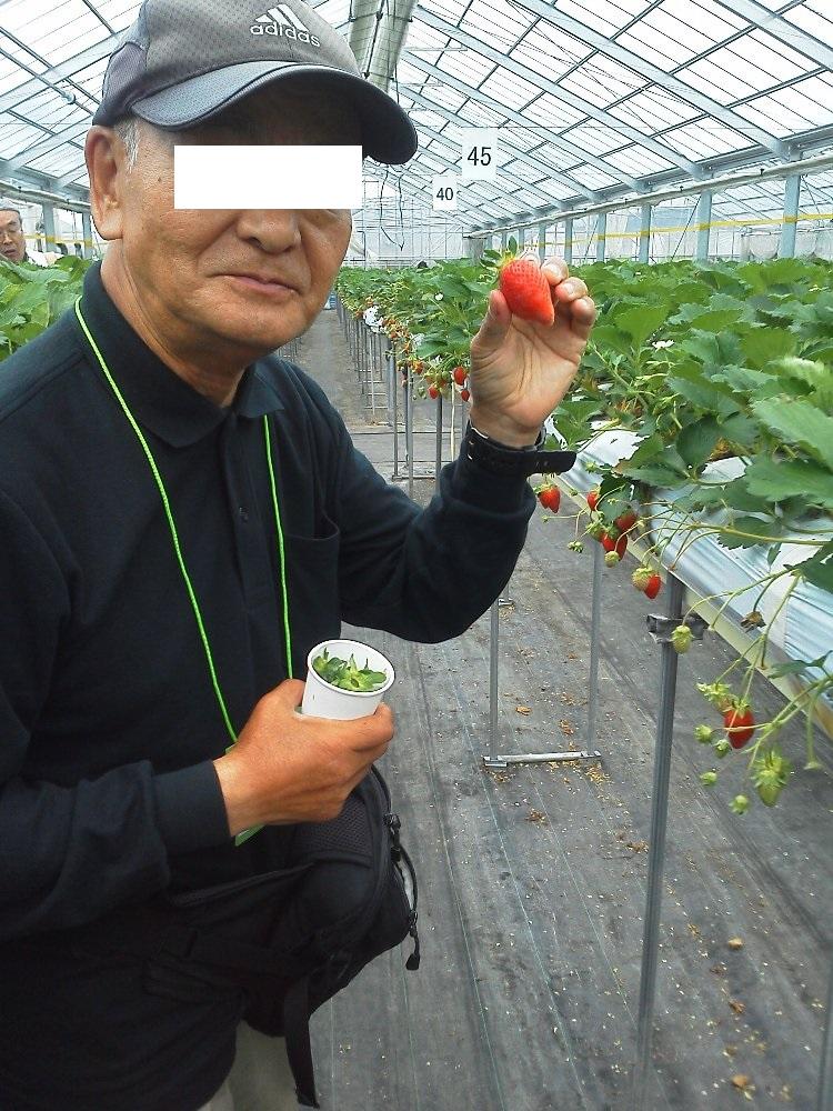 F1000046沼田原田農園いちご狩り5月12日2