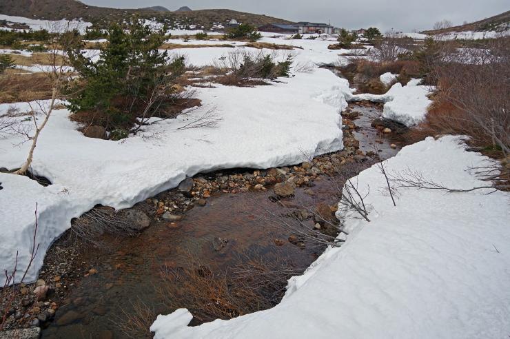 湿原の雪融け