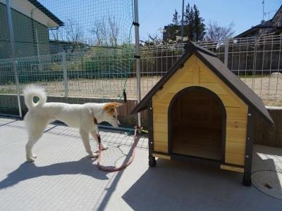 台湾で学んだ本格足つぼ足もみマッサージ・整体を通して根本的な体質改善をお手伝い_愛犬「あいちゃん・生後8か月」に小屋が来ましたよ