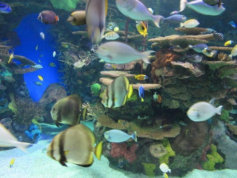 acuarium.jpg