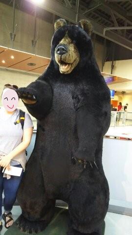 bear_20180723011930c2d.jpg