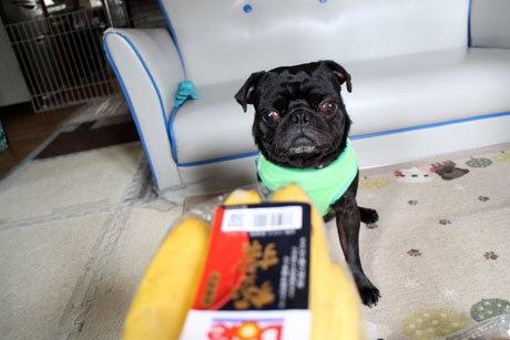 バナナですね