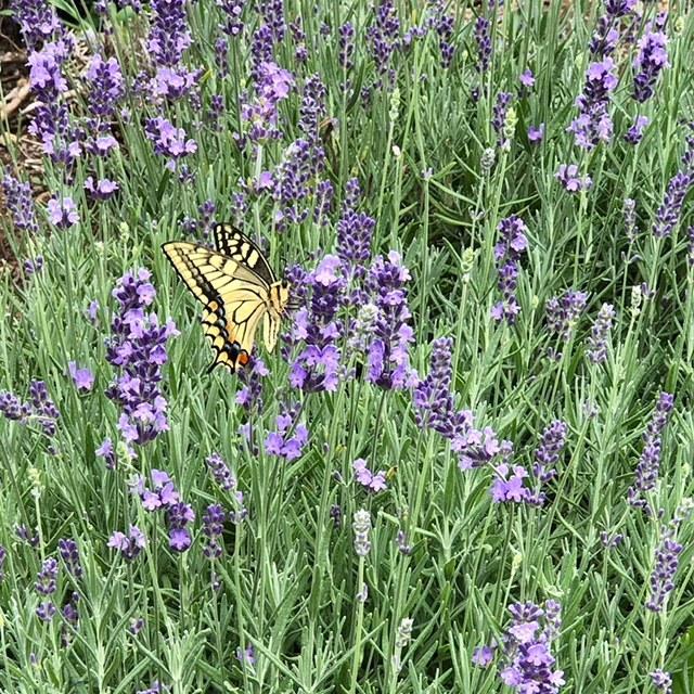 butterflyna.jpg