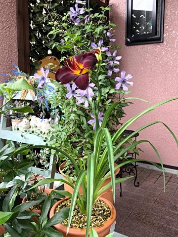 gardening434