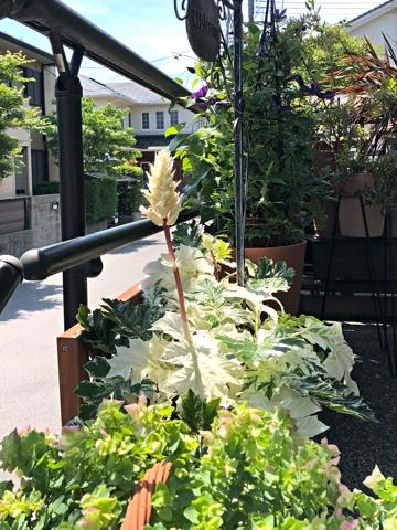 gardening435