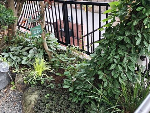 gardening439
