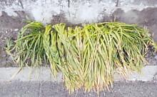 三つ編みの草4