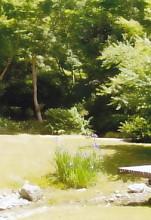 茶室松韻亭日本庭園杜若