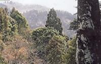 春日奥山風景