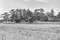 新薬師寺の森