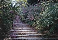 白毫寺萩の石段