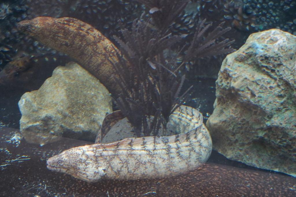 品川の海域の魚_8