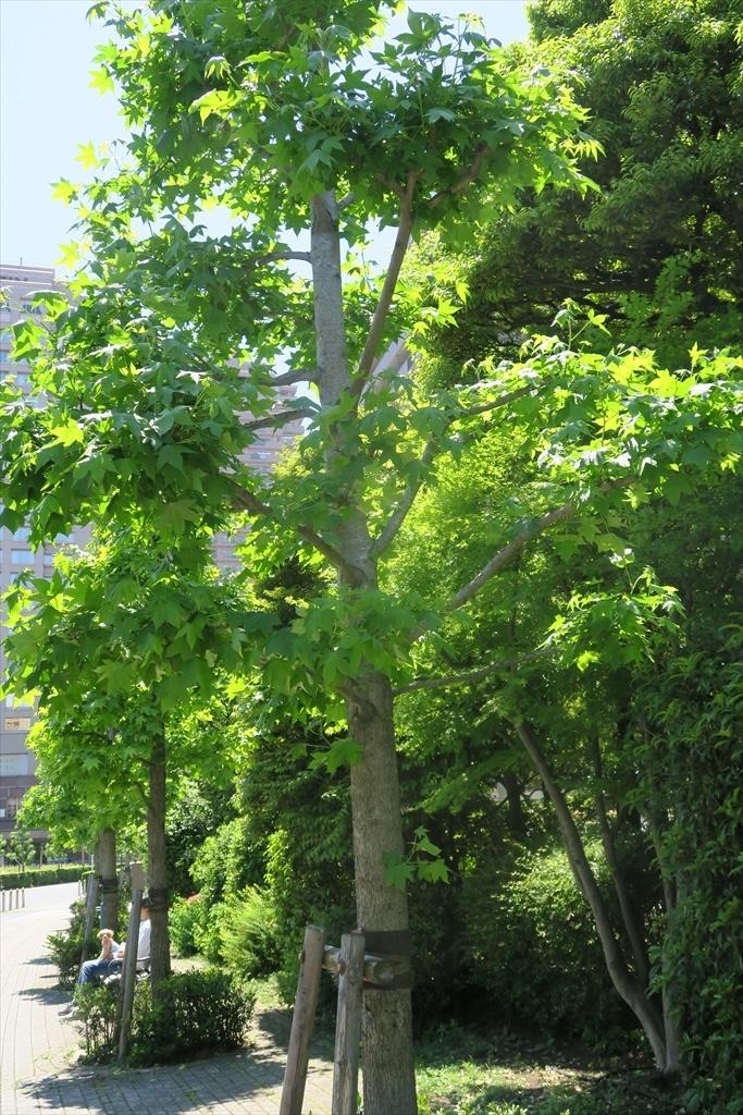 洒落た庭園とその周辺_15