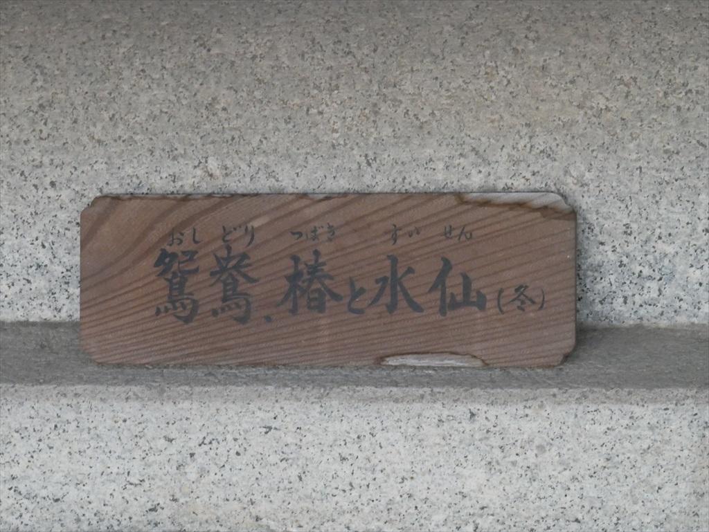 鴛鴦、椿と水仙(冬)_4