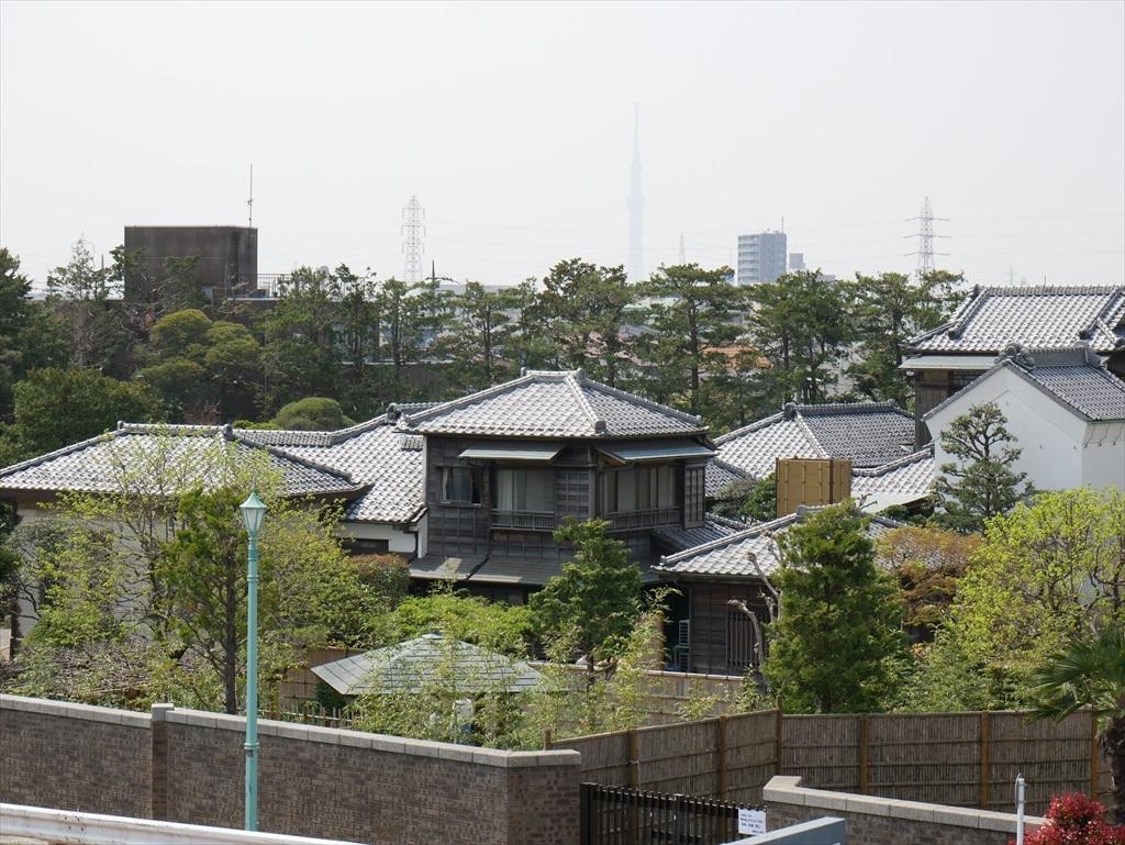 江戸川の堤防の上から見た様子