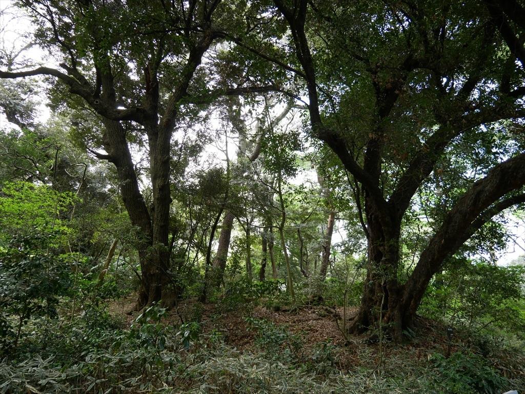 教育園の木々_1