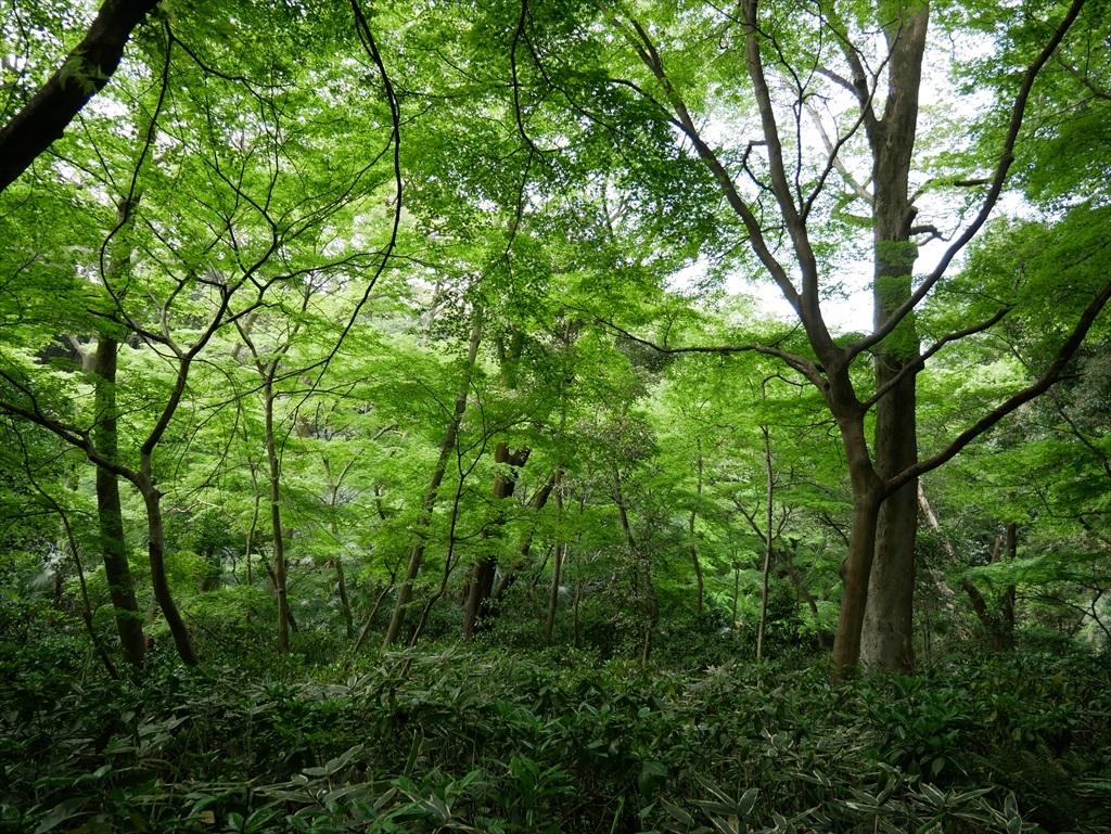教育園の木々_2