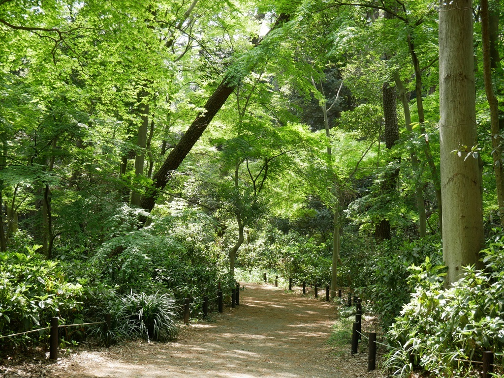 教育園の木々_3