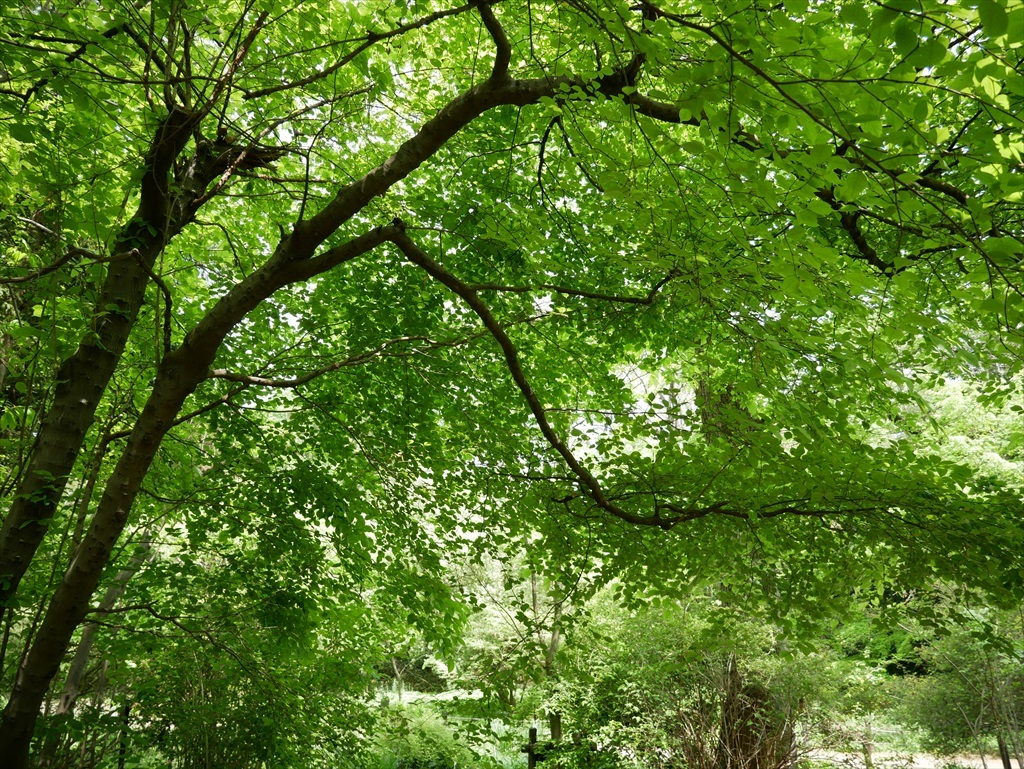 教育園の木々_5