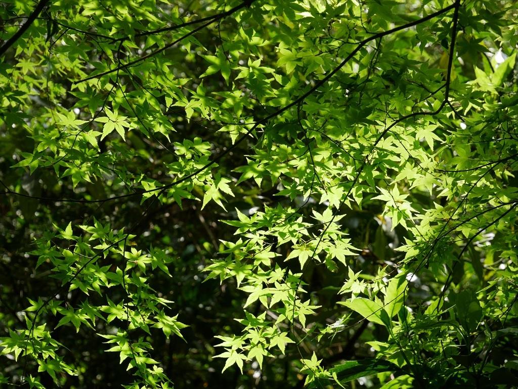 教育園の木々_6