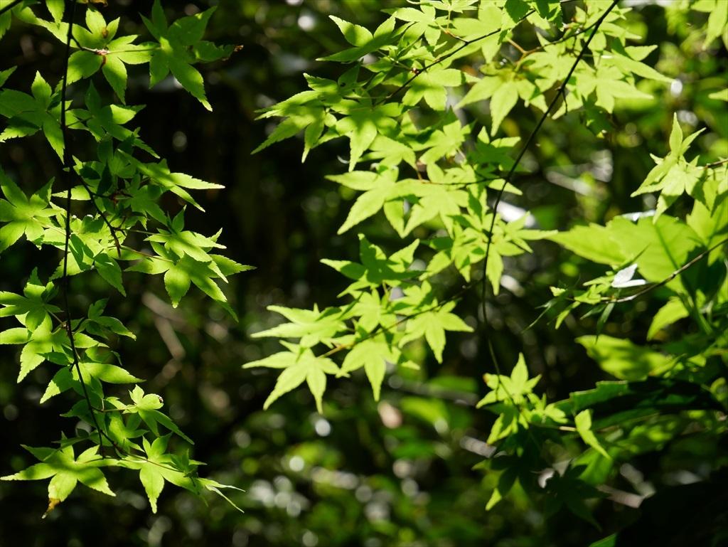 教育園の木々_7