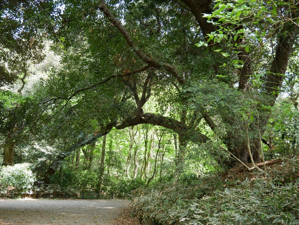 教育園の木々_8