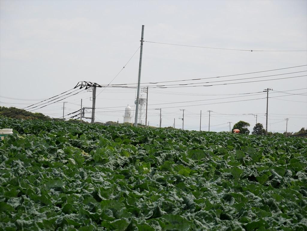 途中にはキャベツ畑が広がる_4